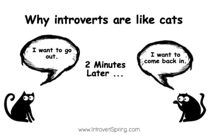 why-introverts-are-like-cats